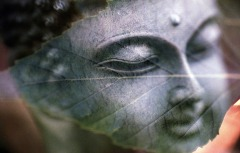 buddha-1279570_1920