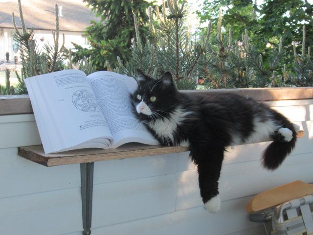 Understanding Your Pet throughAstrology